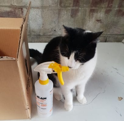 The office animal helps package Xtreme Clean